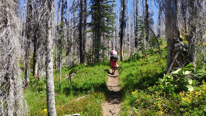 Verbrannte Bäume wie in Oregon