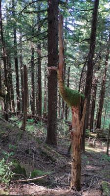 Ein Baum wie ein Straussvogel