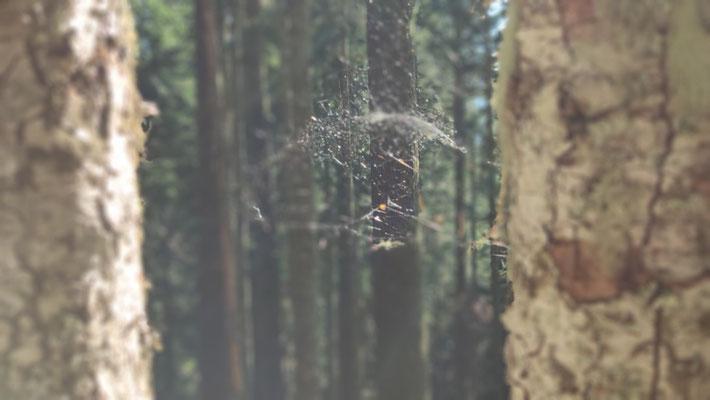 Spinnenweben als Kunstwerk