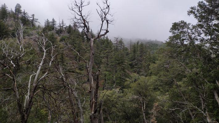 Wieder Nebel und viel Wind beim Abstieg