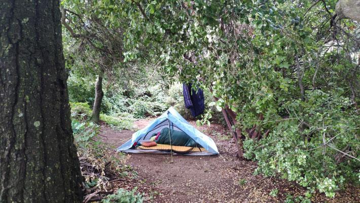 Unser Zeltplatz im Mangrovenwald