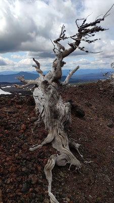 Baum als Kunstwerk