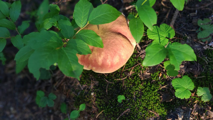 Es gibt hier riesige Pilze!