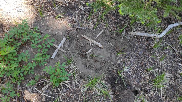 """Mit aus Zweigen gelegten """"X""""-en markiert Sabine die Stellen, wo sie ihren """"Human Waste"""" vergraben hat ;-)"""