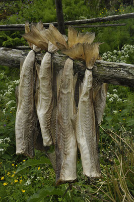 Stockfisch ...