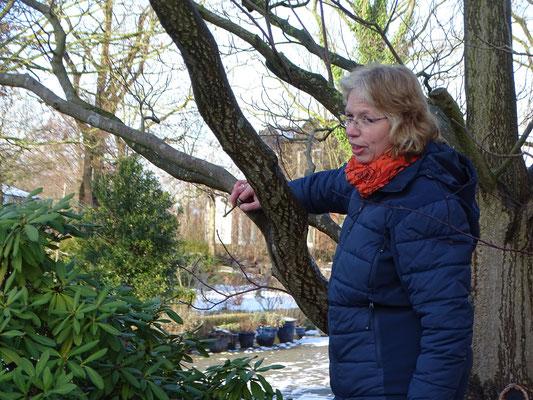 An zahlreichen Beispielen veranschaulichte Karin Wilp den Einfluss des Menschen auf das Wachstum von Gehölzen (Foto: Claudia Frank)