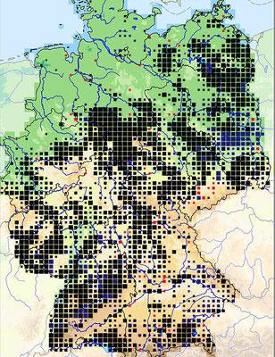 Verbreitung der Mistel in der Deutschland (Quelle: deutschlandflora.de, Datenstand 2013)