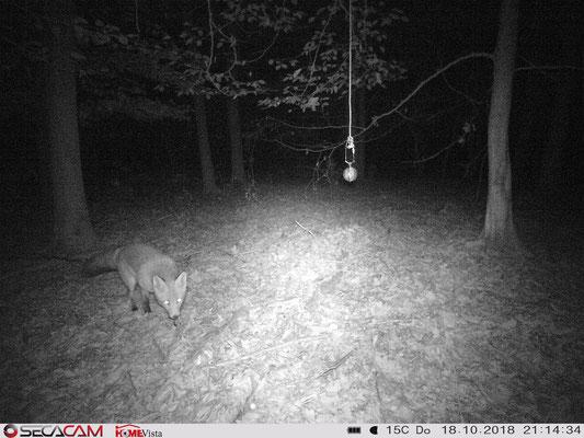 Auch Füchse interessieren sich für den Lockstoff