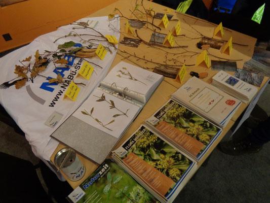 Die AG Botanik bot an ihrem Stand eine kleine Ausstellung mit Quiz rund um winterliche Gehölze, Herbarien und Infomaterial an