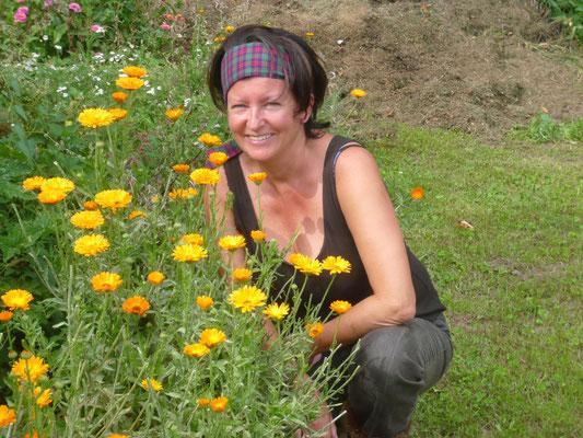 ringelblumen - blühen bis spät in den herbst hinein - sonnenbraut!