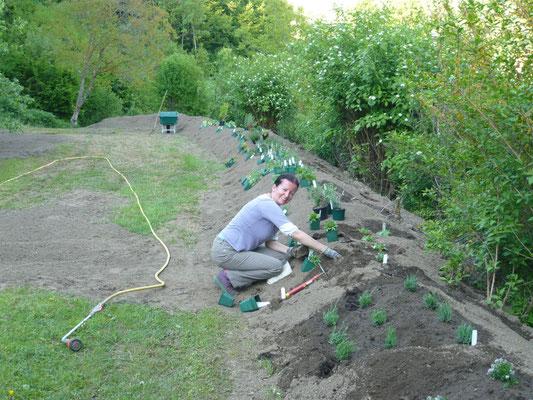 bepflanzung des frisch angelegten beetes