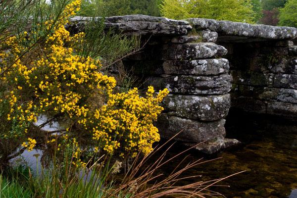 Dartmoor bei Nebel