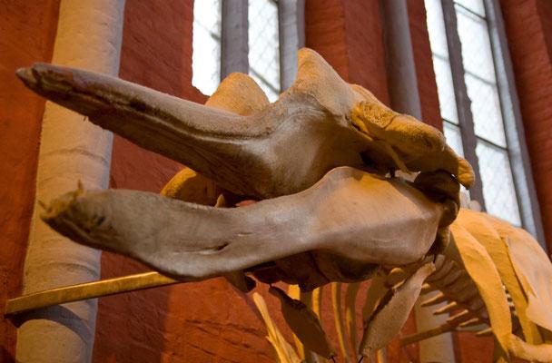 Im Meeresmuseum Stralsund