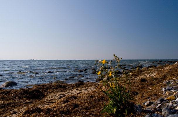 Am Strand von Klein Zicker
