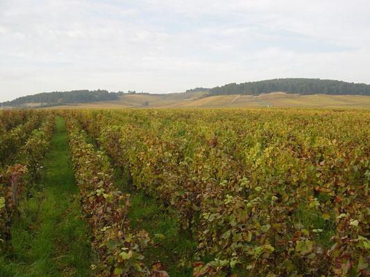Vignes de Monthelie