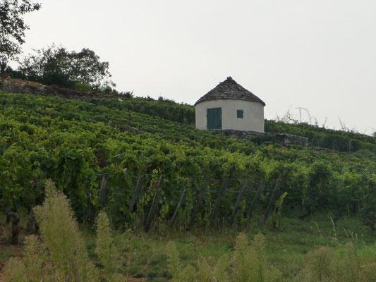 Cabotte à Pommard au milieu des vignes