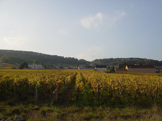 Le village de Volnay et ses vignes