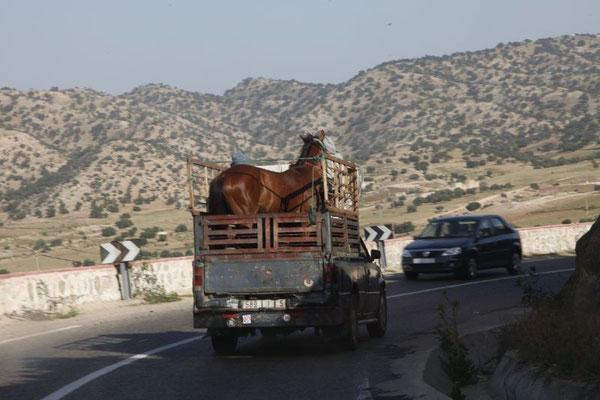 Pferdetransport der andere Art