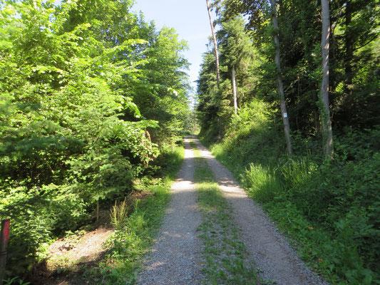 Waldweg zum Weberskreuz