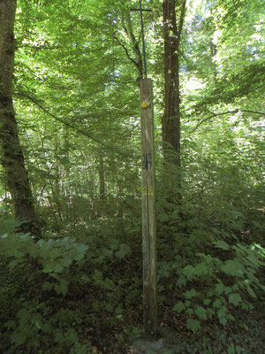 Jakobuskreuz im Altenheimer Wald