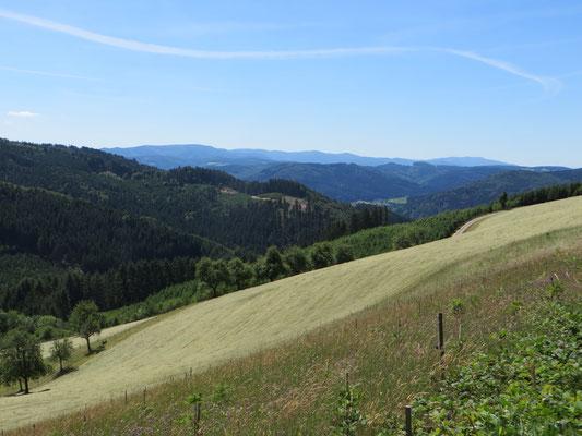 Schöner Blick über Schwarzwaldhöhen