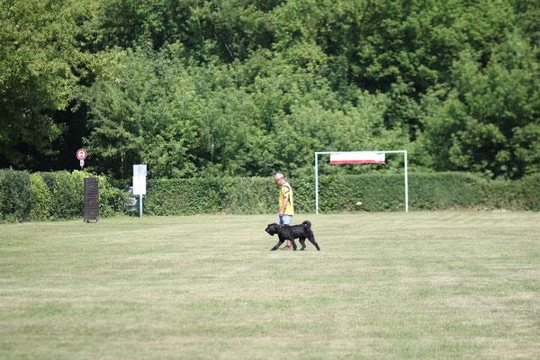 An der Ausgangsposition wird Aufstellung genommen und der Hund zum Revieren eingewiesen.