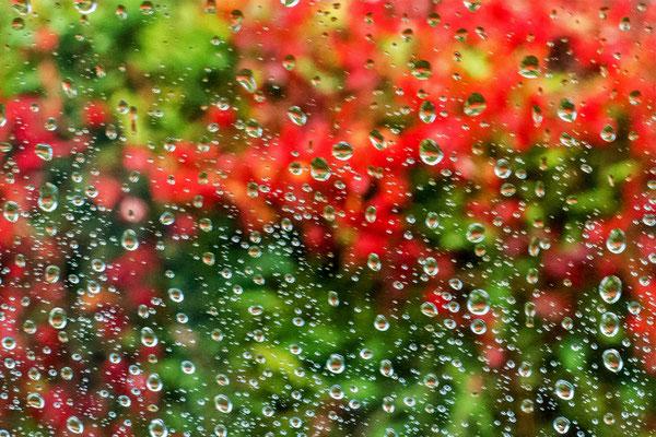 Regen-Segen