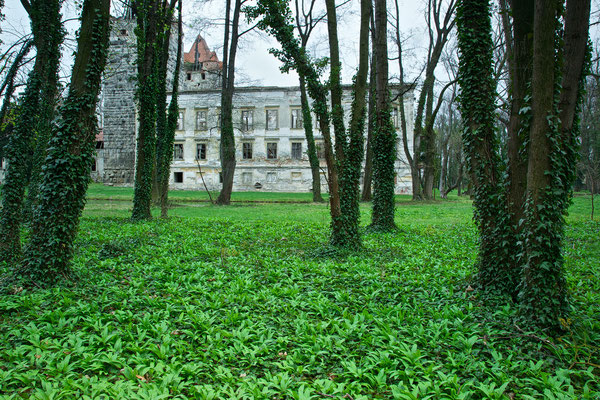 Bärlauch im Schlosspark Pottendorf © c.rebl