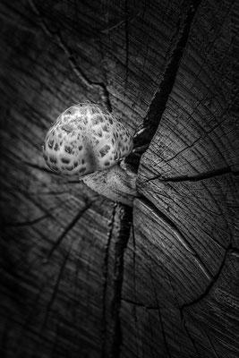 Magic mushroom © c.rebl
