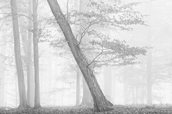 Nebel im Wienerwald II  - Mauerbach © c.rebl