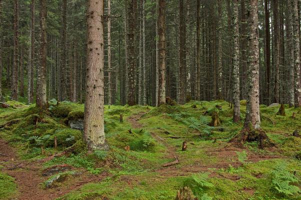 Wegerl im Wald © c.rebl