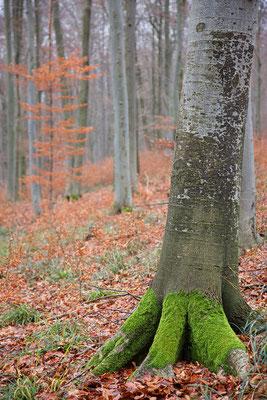 Wienerwald - Sparbach © c.rebl