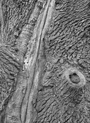 """"""" Haut zu eng """" Schloßpark Laxenburg © c.rebl"""