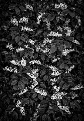 blossom Schlosspark Laxenburg © c.rebl