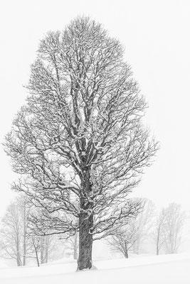 Ramsau/Dachstein 04 © c.rebl