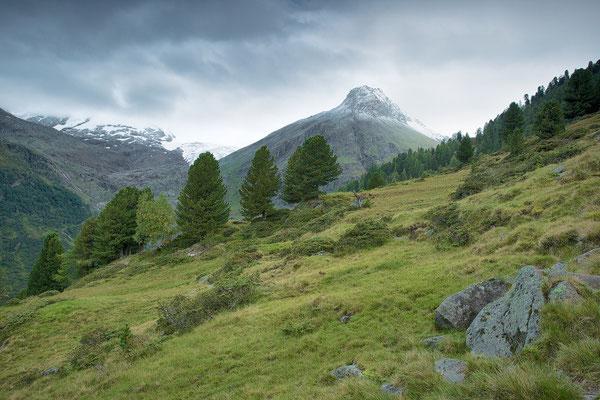 NP - Hohe Tauern Ochsenwald © c.rebl