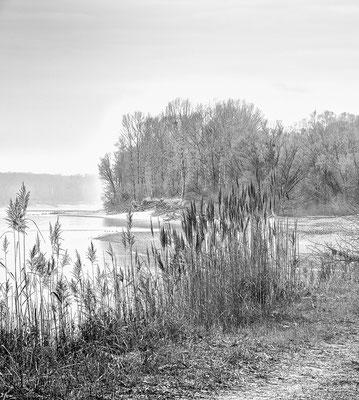 NP - Donauauen © c.rebl