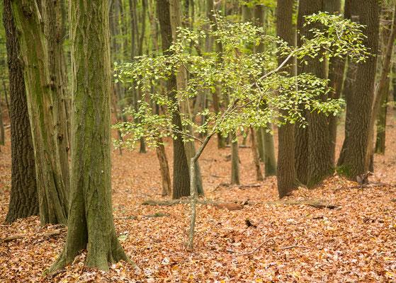 wenn ich einmal groß bin… Wienerwald - Mauerbach © c.rebl