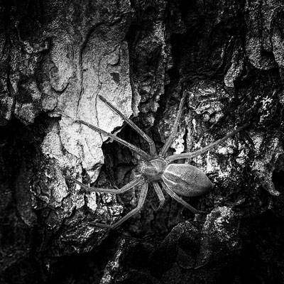 Spyder © c.rebl