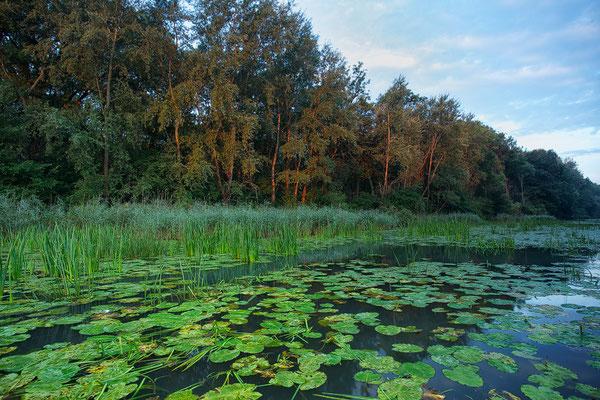 Mitterwasser im Morgenlicht © c.rebl