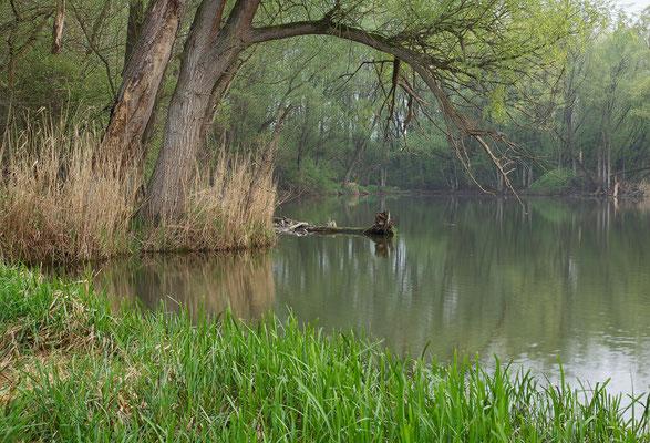 Donauauen / Tulln   © c.rebl