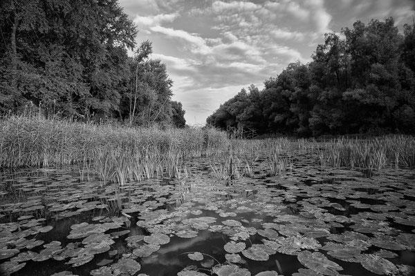 Mitterwasser © c.rebl