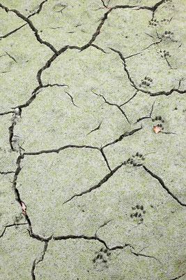Little Foot - Stausee Ottenstein © c.rebl