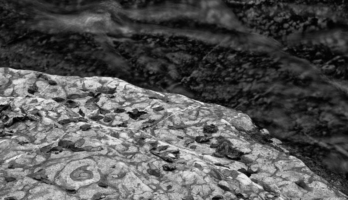Tauglbach Herbst 4 © c.rebl