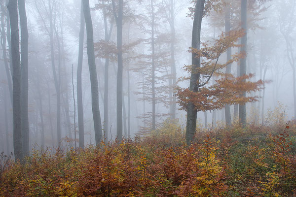 Wienerwald - Mauerbach © c.rebl