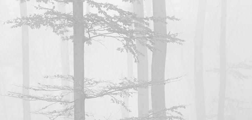 Nebel im Wienerwald III  - Mauerbach © c.rebl