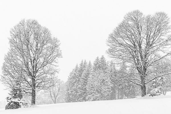 Ramsau/Dachstein 05 © c.rebl