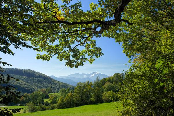 """"""" langsam kommt der Herbst """" im HG der Schneeberg © c.rebl"""