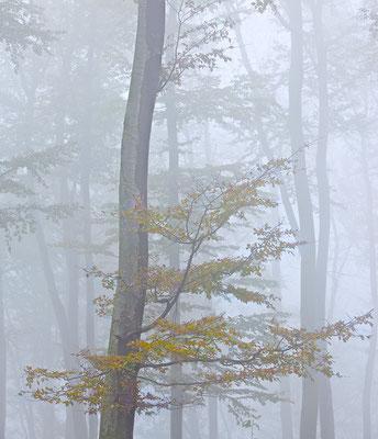 Nebel im Wienerwald I  - Mauerbach © c.rebl
