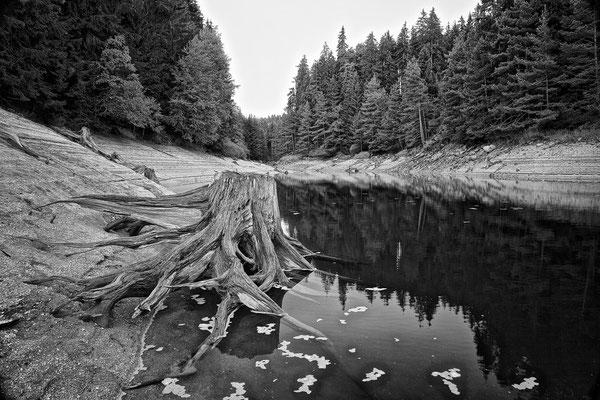 Baumstumpf I / Stausee Ottenstein © c.rebl